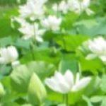 kisetu-ju さんのプロフィール写真